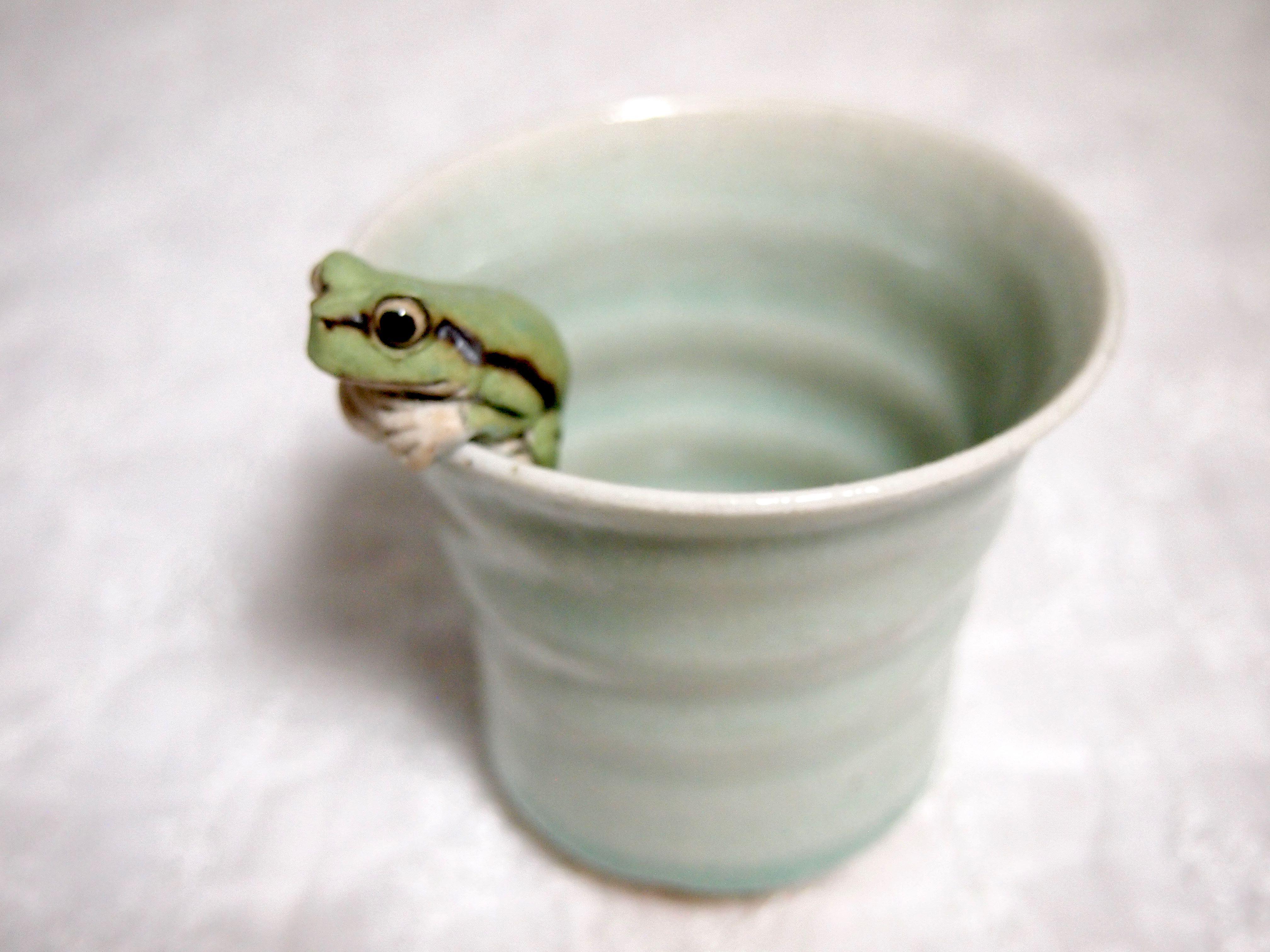 アマガエルのビアカップ